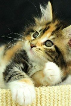 Cute and adorable kitty cat