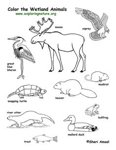 excellent resource for biology