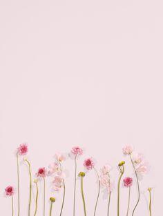 Pink blooms wallpaper blush wallpaper, pink wallpaper и flow Floral Wallpaper Iphone, Blush Wallpaper, Flower Background Wallpaper, Flower Backgrounds, Cellphone Wallpaper, Aesthetic Iphone Wallpaper, Iphone Hintegründe, Pink Iphone, Pretty Wallpapers