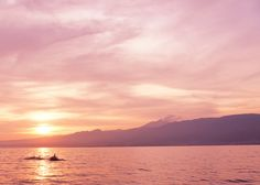 Pod of dolphins swimming by at sunrise in Lovina, Bali