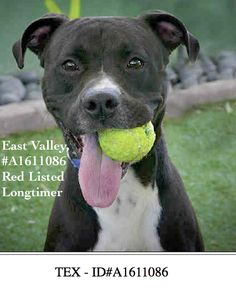 For more information about this animal, call: Los Angeles Animal Services - East Valley Shelter at (888) 452-7381 Ask for information about animal ID number A1611086 Redlisted and a Longtimer.