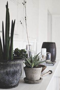 "For those who lack in ""green fingers"", the cactus interior decor is the ultimate solution for you. The cacti that change the look of your room in a moment. Green Plants, Potted Plants, Indoor Plants, Plant Pots, Indoor Gardening, Greenhouse Gardening, Interior Plants, Interior And Exterior, Botanical Interior"