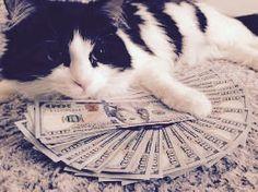This cat has more money than I do