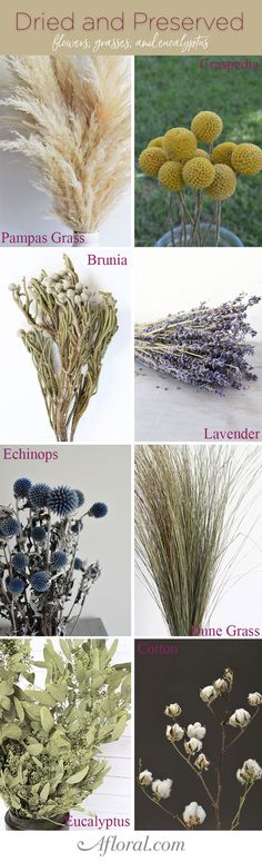 Find unique and naturally beautiful dried and preserved flowers, grasses, and eucalyptus for your fall dried floral arrangements.