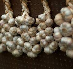 How to grow garlic in pots