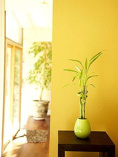 The best places for plants are in the kitchen (between hot and cold appliances to create balance), in the dining room (to draw abundance), and in the family room (to promote health, life, and connection).