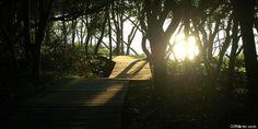10 Best hiking trails on Long Island!