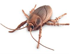 Uncle Milton Scare Factor Scurry and Scare Bugs Cockroach Bug Toys, Bugs, Action, Group Action, Beetles, Insects