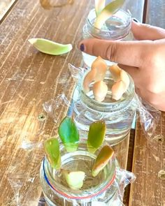 Learn how to propagate your succulents properly here! We, plant lovers, Love to water our plants right? Then why not get this Sometimes I Wet My Plants t-shit, Come in many colors :) succulents #plants #garden #succucity