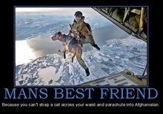 Navy Seal Attack Dogs | ... these dogs are to our troops and how bravely they serve our country. This is funny