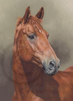 Tankers Town chestnut horse portrait by Mary Herbert