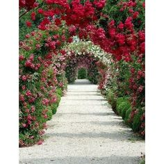 Climbing Roses Embellishment For Your Garden ❤ liked on Polyvore featuring backgrounds, floral and other