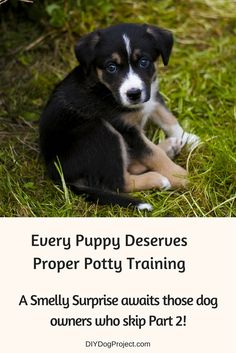 DIY Dog Projects - There's smelly trouble ahead for anyone who skips the crucial (but often missed) second part of puppy potty training. And don't miss our 4 Timing Tips!