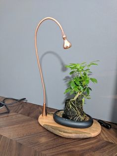 Indoor plant needs light? Try this Plant Tray / Display with Light Indoor plant needs light? Indoor Grow Lights, Grow Lights For Plants, Shamrock Plant, Luz Artificial, Indoor Flowering Plants, Air Plants, Cheap Plants, Bulbs For Sale, Plant Lighting