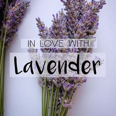 Today's #IngredientSpotlight is lavender. Pure lavender oil is among the gentlest of essential oils and most powerful.  Lavender oil possesses amazing anti-inflammatory, anti-fungal, antidepressant, antiseptic, antibacterial, antimicrobial, antispasmodic, and detoxifying properties as well.  Find this awesome bud in our #VikingSoak. We'll be featuring other uses for lavender too! But make sure to shop RECOVERY on our site. >>Link in Profile<<