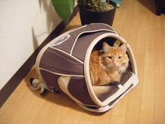 cat house style