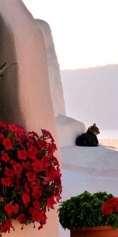 Cats of Santorini