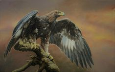 Wildlife Paintings, Wildlife Art, British Wildlife, Birds Of Prey, Zebras, Paintings For Sale, Art Blog, Mammals, Amazing Art