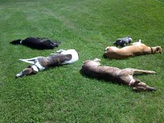 "2009. ""Greyhound Stonehenge"". Willie, Frank, Abby, Woodsy"