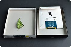 Very neat idea...darkroom-less photos using a scanner to preserve the image instead of developing. might have to do this with students...
