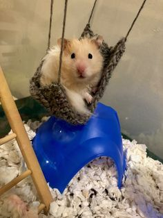 Hamster Pics, Baby Hamster, Hamster Care, Hamsters As Pets, Funny Hamsters, Cute Little Animals, Cute Funny Animals, Hamster Habitat, Syrian Hamster