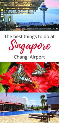 From rooftop pools to delicious Singapore food – how to make the most of a layover at Singapore Changi Airport … Singapore Guide, Singapore Travel Tips, Singapore Food, China Travel, Japan Travel, Singapore Changi Airport, Visit China, Backpacking Asia, Amazing Destinations