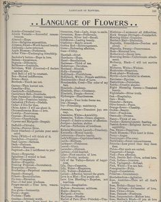Learn the Victorian Meaning of Flowers + FREE vintage printables! – Bev Rainey Learn the Victorian Meaning of Flowers + FREE vintage printables! The Language of Flowers [free vintage printable] Creative Writing, Writing Tips, Writing Prompts, Flower Meanings, Herb Meanings, Name Meanings, Plant Meanings, Language Of Flowers, No Rain