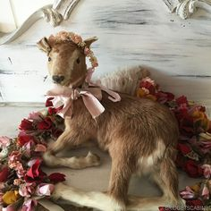 Vintage French Taxidermy Goat in lying pose Display mannequin