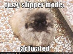 Uh oh slipper mode