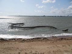 Snake, Ocean, Brittany, The Ocean, Snakes, Sea