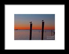sunset, silhouette, bird, pier, nature, sky, water, florida, landscape, michiale schneider photography, interior design, framed art, wall art