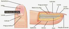 Bloombee: A estrutura das unhas