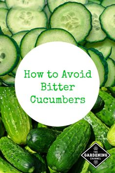 to Avoid the Problem of Bitter Cucumbers Learn how to grow great tasting cucumbers and avoid bitter tasting cucumbers with these gardening tips.Learn how to grow great tasting cucumbers and avoid bitter tasting cucumbers with these gardening tips. Front Garden Landscape, Garden Landscaping, Landscaping Ideas, Pergola Ideas, Greenhouse Ideas, Backyard Ideas, Organic Vegetables, Growing Vegetables, Gardening Vegetables