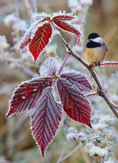 Autumn Chickadee Print By Ron Jones