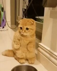 On dirait le chat botté XD ❤️ Cute Funny Animals, Cute Baby Animals, Animals And Pets, Funny Cats, Cute Kittens, Cats And Kittens, Kitty Cats, Beautiful Cats, Animals Beautiful