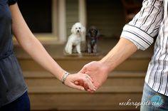 Google Image Result for http://heatherneckers.com/wp-content/uploads/2009/08/poodles-family-portrait.jpg