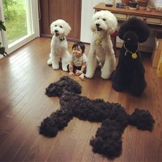 Little Girl And Her Poodle Do Everything Together, And Their Friendship Pics Will Make Your Day | Bored Panda