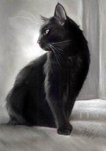 Katze Pastell