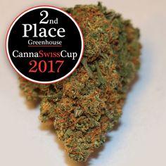 Canna Swiss Cup・Gewinner Hunderte von Jury-Mitgliedern haben gewählt und die Sieger erkoren. Wir sind auf dem 2. Platz (Glashaus) und 3. Platz (Indoor) gelandet. #cannaswisscup2017 #cannaswisscup #cannabiscup #switzerland #growing #cbd #cannabis #thebotanicals #Kiosk #purenaturalraw #Cannabisnews #MedicalCannabis #Pro7 #cbdgoldoil #Hanf #Weed #Forschung #Prävention #Medizin #THC #Marijuananews #Tabakersatz #SwissCannabis #Artur #Cannabidiol #Pot #Medizinischescannabis #ArturCBD #ArturWeed Kiosk, How To Dry Basil, Cannabis, Herbs, Pure Products, Glass House, Hemp, Research, Medicine