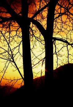 Photograph taken in Camera Cosina (Automatic with telemetric focus) Place:Alta Valsassina.Monte Cimone (Italy) Digitalized: Edited in Corel Paint Shop Pro X Corel Paint, Kodak Film, Paint Shop, Italy, Celestial, Sunset, Places, November, Photograph