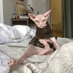 Here Are Some Photos Of Sphynx Cats I Thought Were Naked People