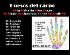 mnemotecnias medicina - huesos del carpo