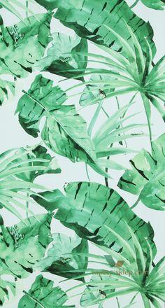 drzewa monster egzotyczne egzotyka palmy palmowe palmami bananowiec bananowca liść liście liści