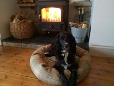 Monty on his tweed bed #ilovemydog #dog #customerboardofhappiness #happydog #happycustomer