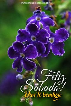 Sabbath Quotes, Spanish Greetings, Happy Sabbath, Good Saturday, Quotes En Espanol, Good Morning Good Night, Morning Messages, God Loves Me, Morning Images