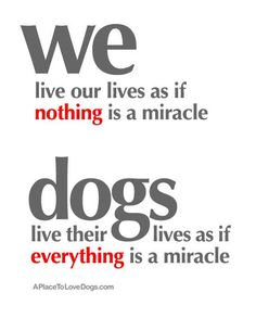 we live our lives as if nothing is a miracle, dogs live their lives as if everything is a miracle