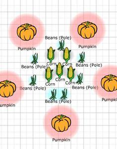 A 3 sisters garden plan