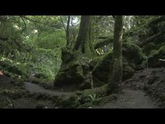 """I CAN""""T WAIT TO GET THERE!!!!  Puzzlewood forest.... here I come!"""