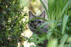 20 métodos efectivos para evitar gatos en nuestros jardines o cultivos