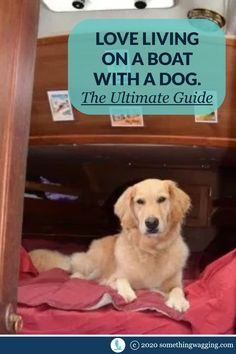 Find everything you need to think about before cruising on your boat with your dog--all in one place. With links and resources for learning even more. Living With Dogs, Living On A Boat, Dogs On Boats, Sailboat Living, Dog Friendly Hotels, Hiking Dogs, Dog Anxiety, Dog Care Tips, Dog Travel